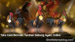 Tata Cara Bermain Taruhan Sabung Ayam Online