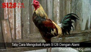 Tata Cara Mengobati Ayam S128 Dengan Alami